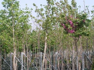 Δέντρα cover image